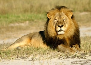 Worse Things Are Happening (But We Can Still Care about Cecil)